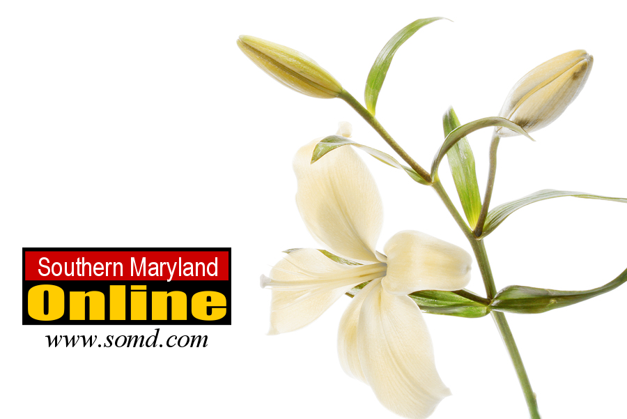 Business plan writing services maryland