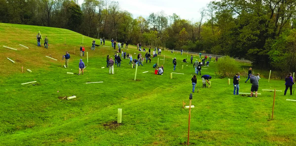 revive earth day u0026 39 s roots  celebrate its 50th by planting a